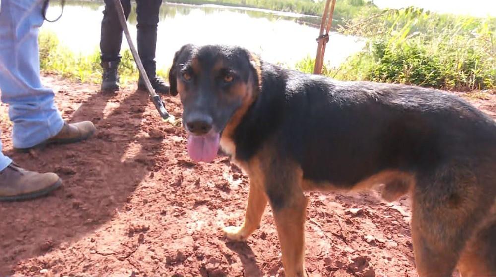 O cachorro Negão quase virou refeição de uma sucuri de quatro metros em Jaborandi, SP — Foto: Fabio Junior/EPTV